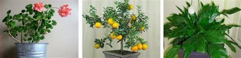 Inrossas Zelta grāmata: Augi, kas attīra gaisu