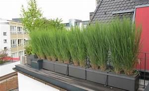 delicieux bac pour bambou terrasse 12 brise vue balcon With bac pour bambou terrasse