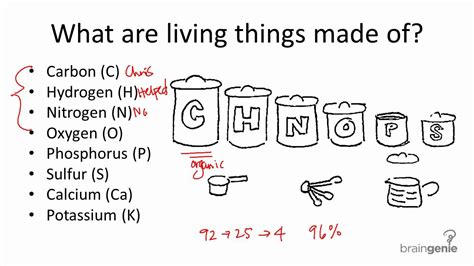 1.1.1 Common Elements In Living Things