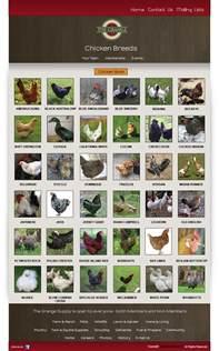 Chicken Breed Identification