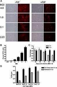 Adipose Tissue Derived Mesenchymal Stem Cells  Msc  Are