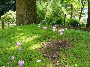 Amenager Un Petit Jardin Sans Pelouse : remplacer le gazon les plantes couvre sol alternatives la pelouse ~ Melissatoandfro.com Idées de Décoration