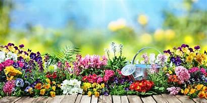 Summer Garden Gardening Tips Imondi Florists Son