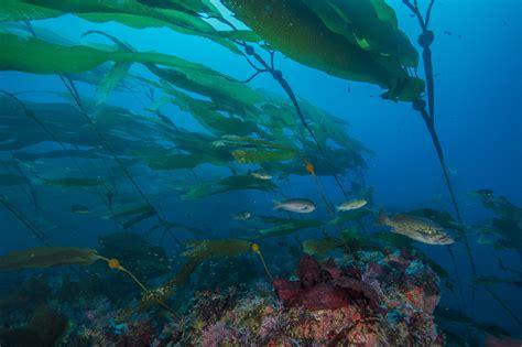ocean life oceans  national park service