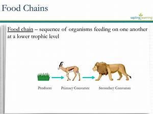 Energy Flow Through Trophic Levels