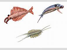 Anomalocarididae — Wikipédia