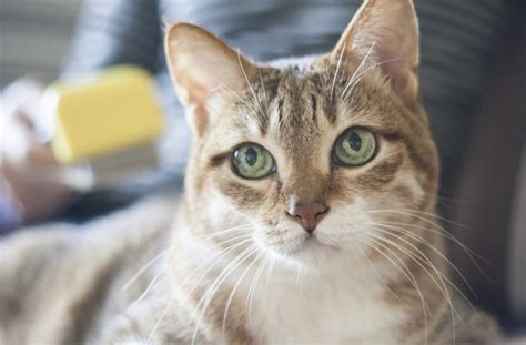 List Of Synonyms And Antonyms Of The Word Kitten Eye