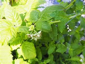 Himbeeren Auf Dem Balkon : urban gardening gem se auf dem balkon teil 2 wie pflanze ich richtig ordnungsliebe ~ Eleganceandgraceweddings.com Haus und Dekorationen