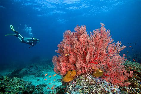 blowing tiny bubbles   protect coral reefs takepart