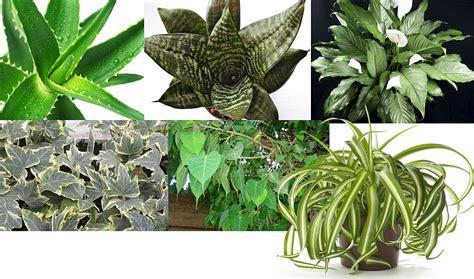 Atrodi savu telpaugu! LU Botāniskais dārzs izpārdod ...