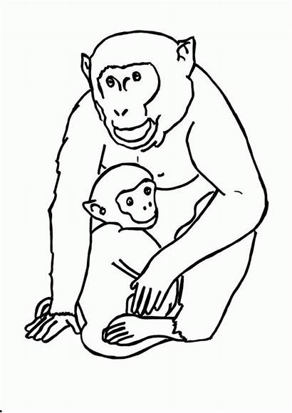 Coloring Animal Gorilla Printable Pages Template Jungle