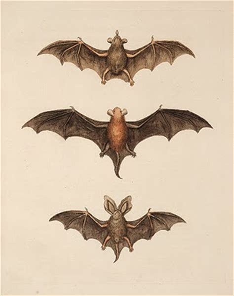 halloween clip art flying bats  graphics fairy