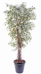 Arbre D Intérieur : arbre artificiel ficus lianes petites feuilles plante d 39 int rieur cm vert cr me ~ Preciouscoupons.com Idées de Décoration