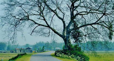 williamnagar tourism  meghalaya top places