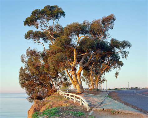 edwin beckenbach photography portfolio eucalyptus