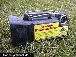 Mittel Gegen Wühlmäuse : w hlmause bek mpfen erfahrungen zur w hlmaus im garten ~ Lizthompson.info Haus und Dekorationen