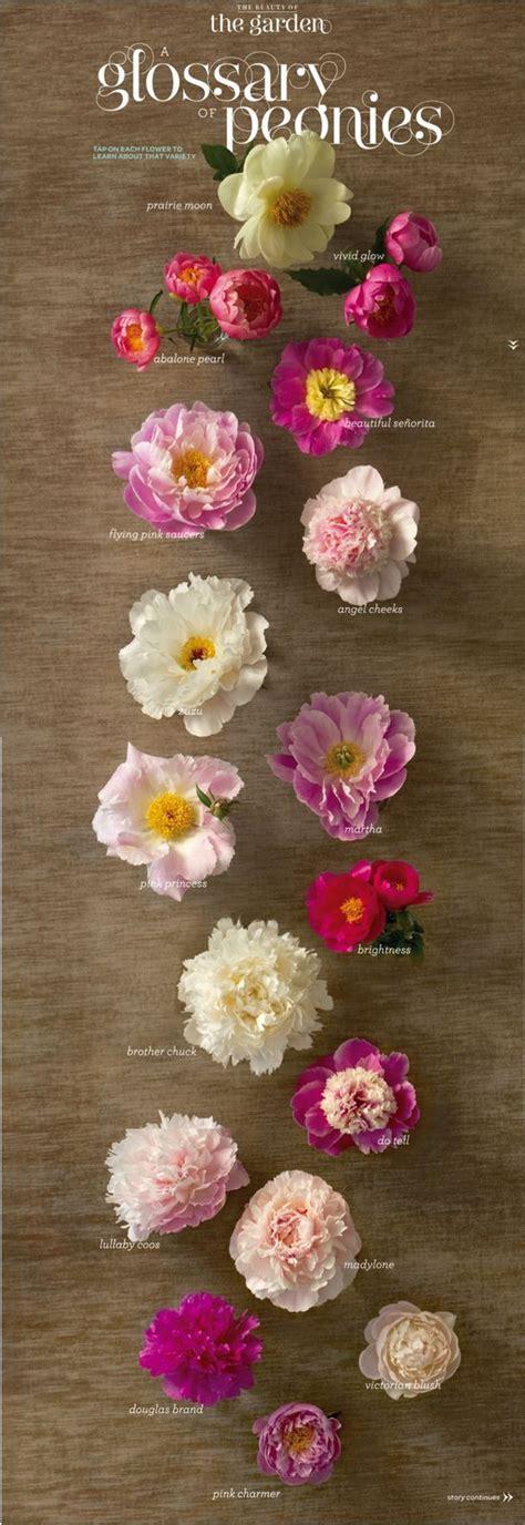 types of peony peony types floral peony pinterest