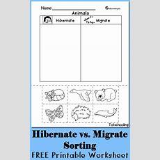 Hibernation Vs Migration Animal Sorting Worksheet  Free Worksheets, Worksheets And Kindergarten