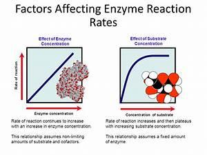Biozone Slideshow Enzymes