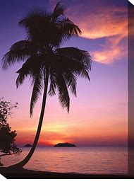 Beautiful Beach Sunset Palm Trees