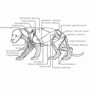Tiger Reproductive System