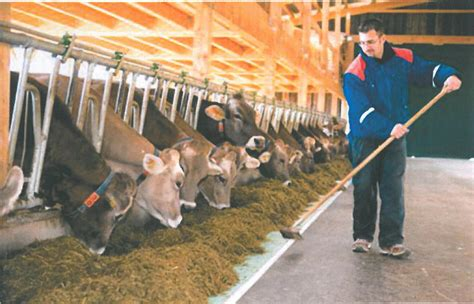 Other Factors Willows Hoof Care