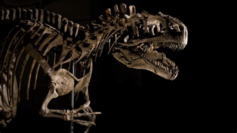 Animal Dinosaur Wallpaper - dinosaur hd wallpaper and background image