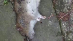 Ratten Bekämpfen Im Garten : ratten erfolgreich im garten bek mpfen youtube ~ Michelbontemps.com Haus und Dekorationen