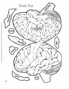 1000 images about brain on pinterest right brain the With brain hat template