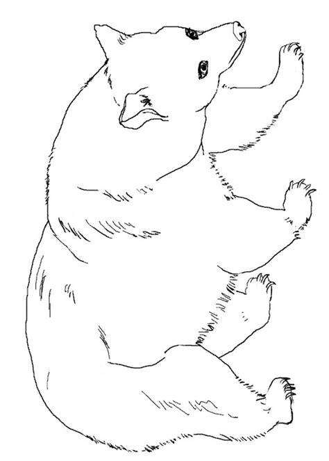disegni  orsi da colorare pianetabambiniit