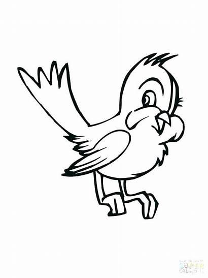 Coloring Bird Pages Cartoon Drawing Birds Bluebird