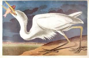 John James Audubon Birds of America
