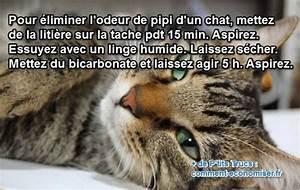 Enlever Odeur Urine Chien : litiere chat bicarbonate ~ Nature-et-papiers.com Idées de Décoration