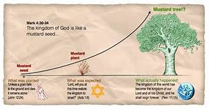 17 Best images about PARABLE OF THE MUSTARD SEED!!! on ...