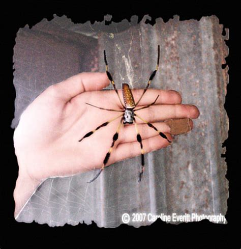 Barn Spider Bite by How To Start A Panic On The Wasted Talent