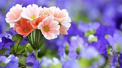 Flowers Flower Wallpapers Mobile Wallfree Disimpan Dari
