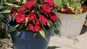 Painted Flower Pots that Last