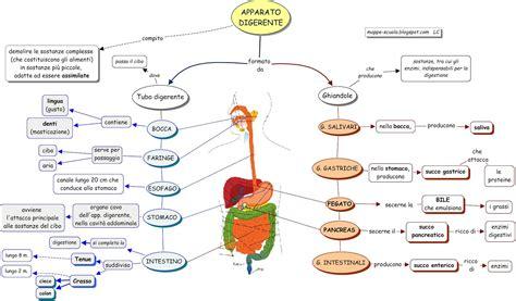 Muscolo Rosso Testo by Siti Alternativi Per Cercare Mappe Di Scienze Biologia