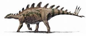 Tuojiangosaurus Pictures & Facts - The Dinosaur Database