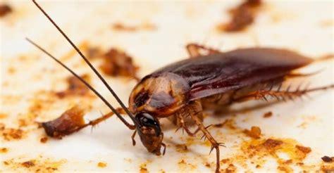 keeping roaches    restaurant pest management