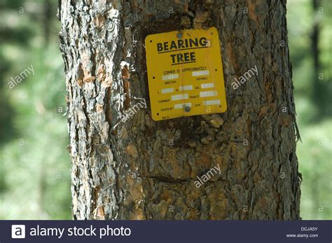 bearing tree bearing tree used in land survey black hills south dakota stock photo royalty free image