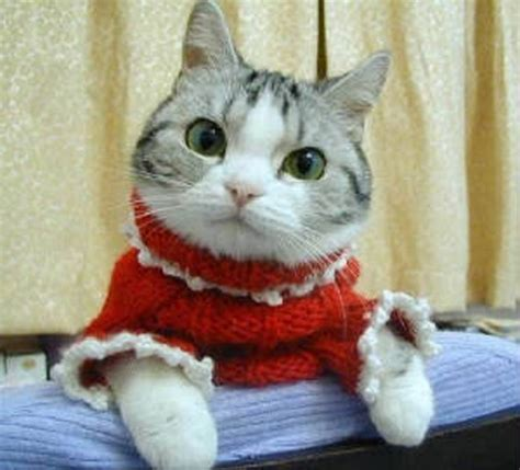 cat sweaters for cats the diary of a bookworm 109 cats in sweaters because