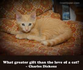 quotes about cats quotes about and cats quotesgram