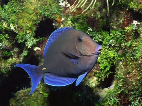 Discus Fish Wallpaper (48+ Pictures