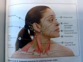 Ear Lymph Nodes