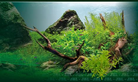 Aquascape Substrate by Aquascaping Sand Gravel Or Soil Which Is Best