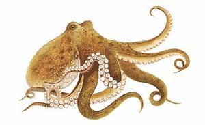 Nachhaltig Leben Und Konsumieren : oktopus im wwf einkaufsratgeber stammt oktopus aus nachhaltiger quelle ~ Yasmunasinghe.com Haus und Dekorationen