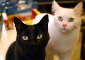 black cat white cat black cat white cat miscellaneous photos signs of