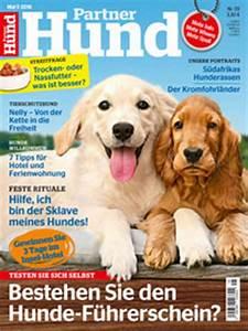 Partner Hund Abo Kündigen : vorsicht giftig f r katzen geliebte katze magazin ~ Lizthompson.info Haus und Dekorationen