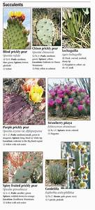 Plants Of The Chihuahuan Desert  U2013 Quick Reference Publishing